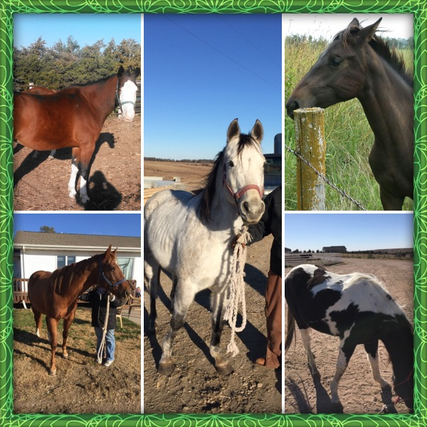 Double R Horse Rescue where we believe EVERY horse deserves a second chance.