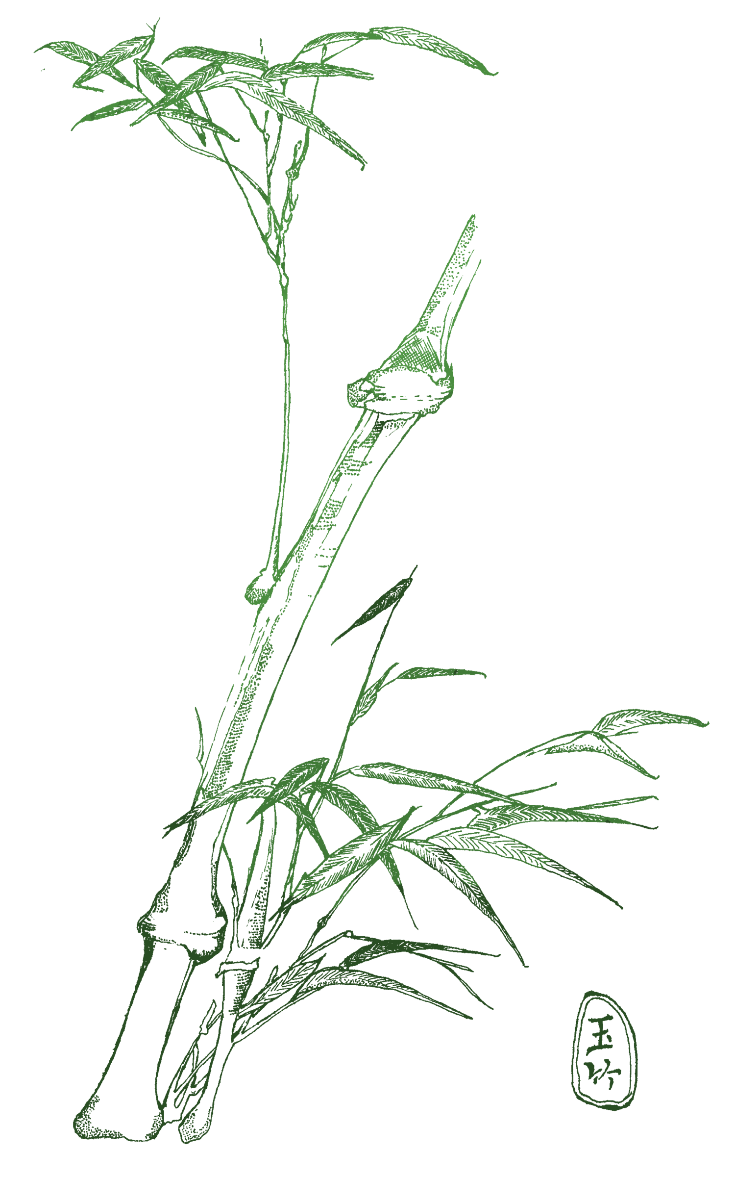 Root Stem & Branch