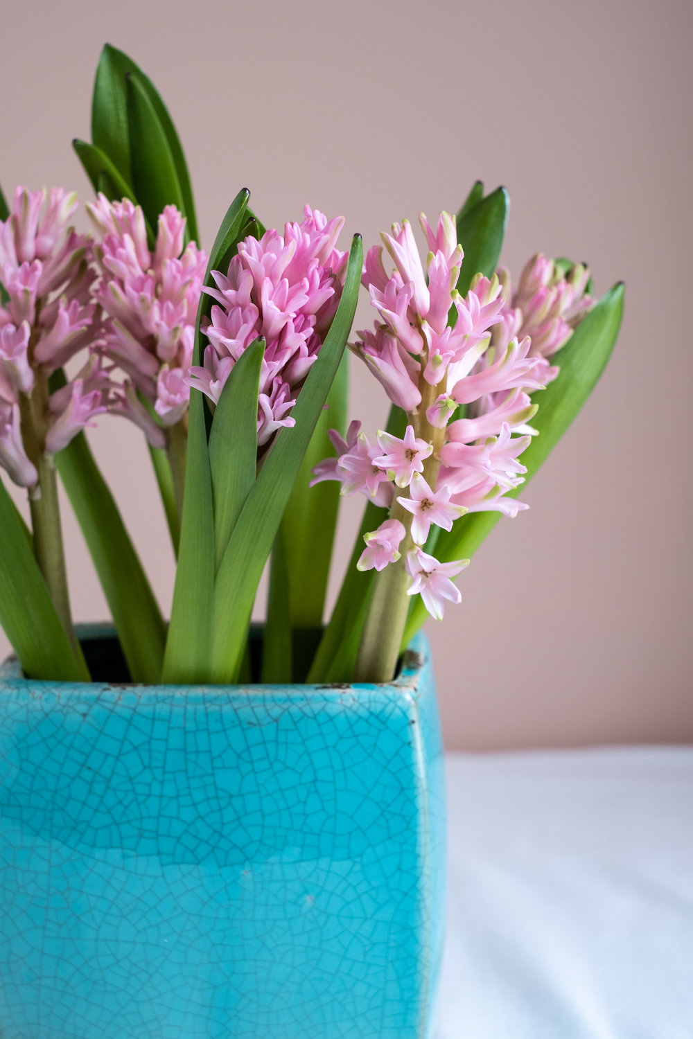 pink hyacinths in turquoise vase
