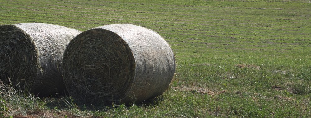 Copy of <i>Alfalfa Bales</i>