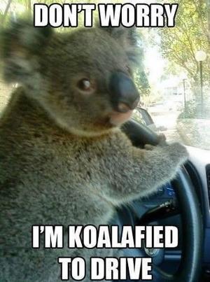 driving-meme.jpg