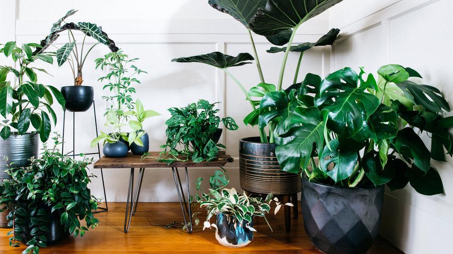 grouped-big-leaf-houseplants-sun-0217.jpg