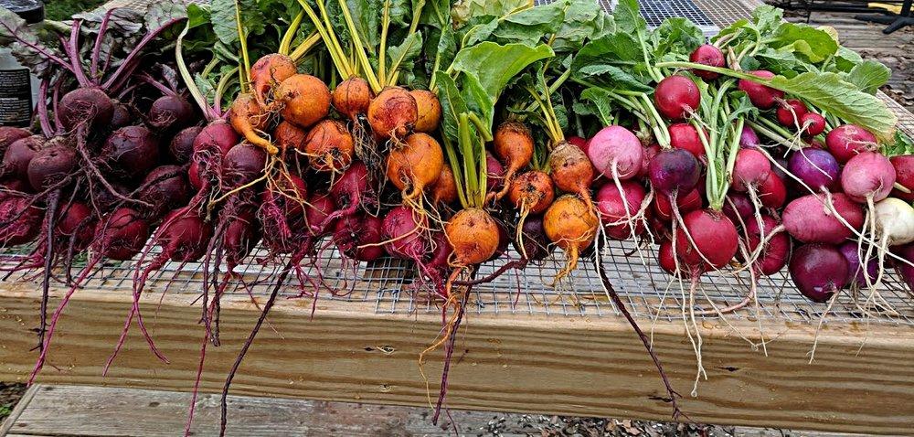 Field to Fridge. - Small, restorative, naturally managed.Local, nutritious, delicious.Health, wealth, wellness.We are Wando Organics.Mount Pleasant, South Carolina