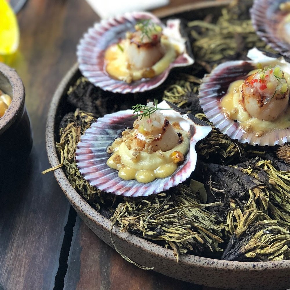 Scallops at Barra Lima