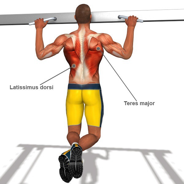 Pull-up Muscle Groups