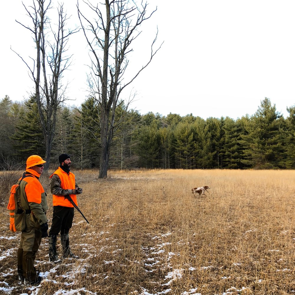 Chip and Justin surveying the low hunt field with Antar working the field