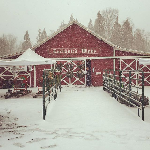 First snow at the farm today. #letitsnow #enchantedwinds #enchantedwindschristmastreefarm #christmastrees
