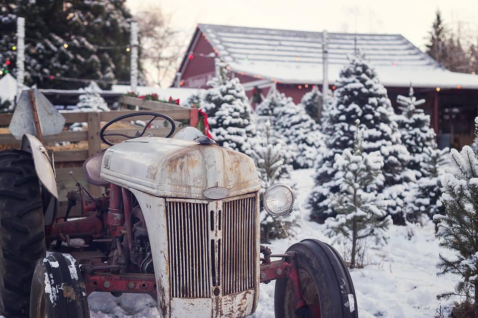 xmas tree farm tractor.jpg