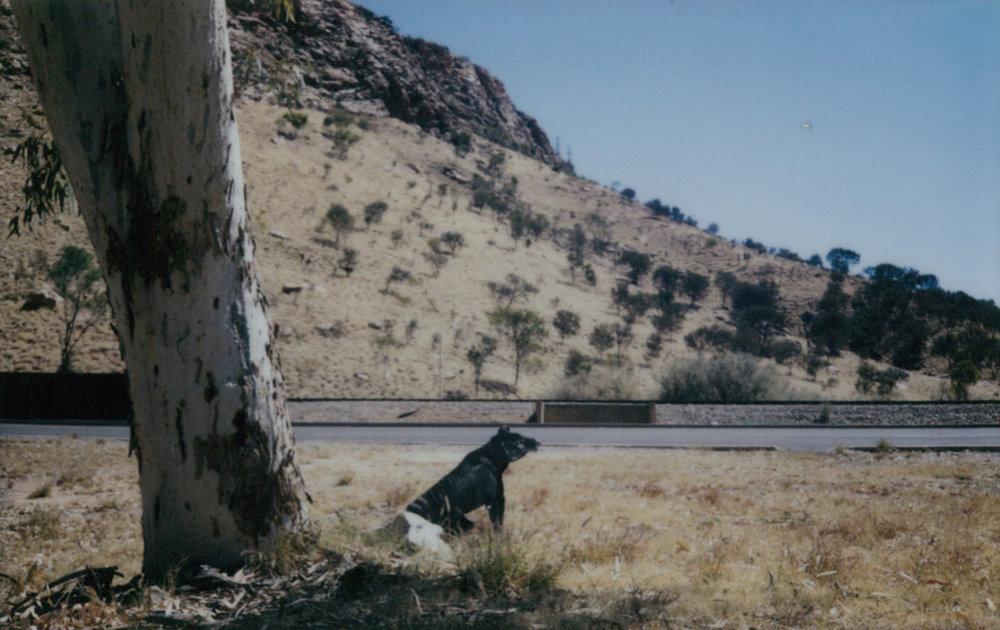 Thylacine gap 4 FB.jpg