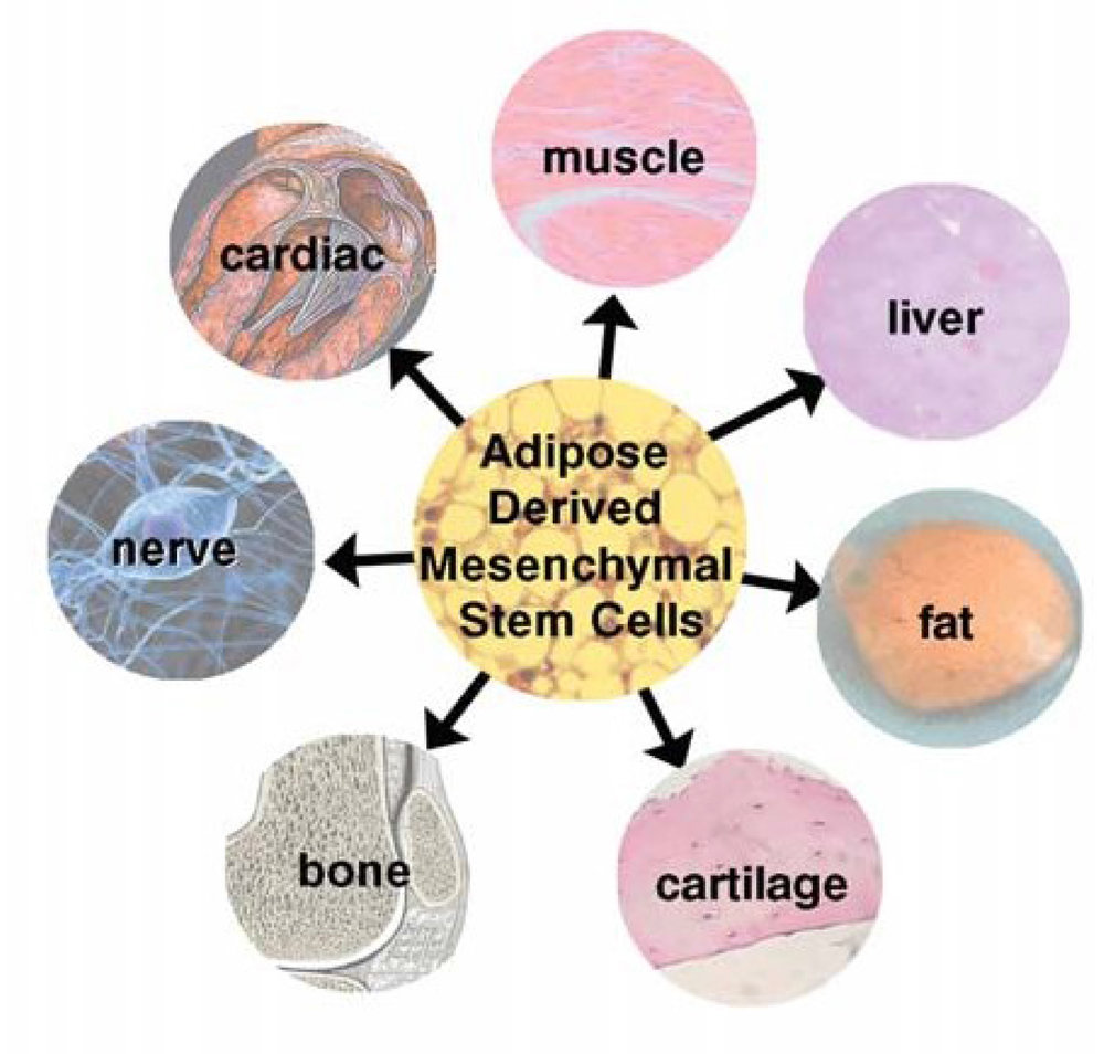 best-stem-cell-1468x1400.jpg