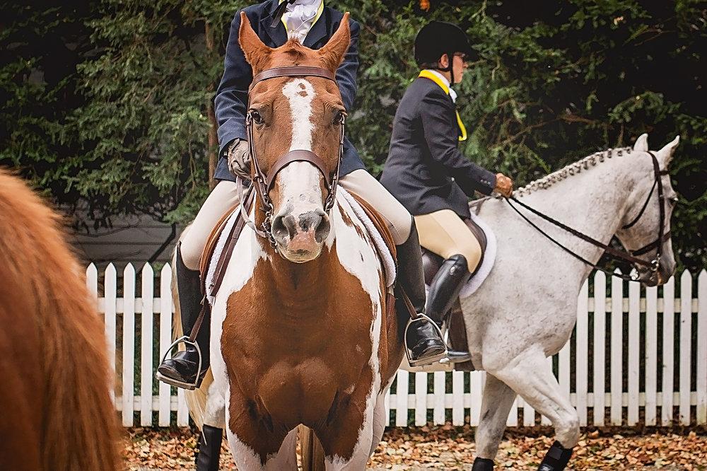 Horses2017-2.jpg
