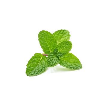 mint leaves_75684928_XS.jpg