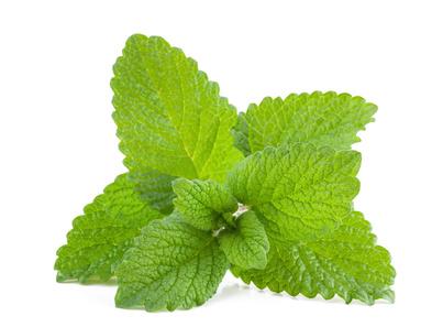 lemon balm leaves_81765493_XS.jpg