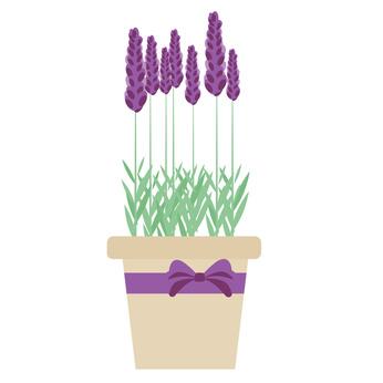 lavender 126936136_XS.jpg