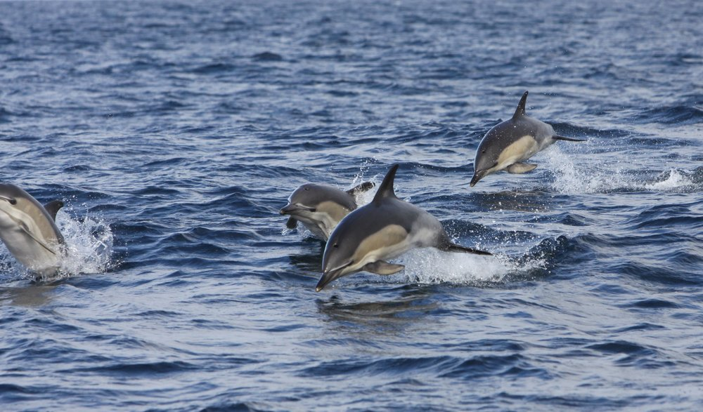 You may even catch sight of seals, basking sharks, sunfish and perhaps a dolphin! Photo Credit:  Padraig Whooley