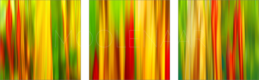 """Mirage (Triptych)  by Lucien Moolenaar Three C-Type Prints Aluminium & Perspex Mounted, 30x30"""" each (Edition of 10)"""