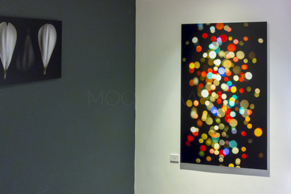 Moolenaar - Lights.jpg