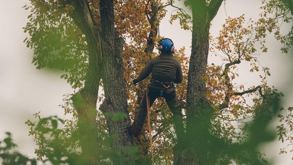 Trädvård ⎯  Läs mer