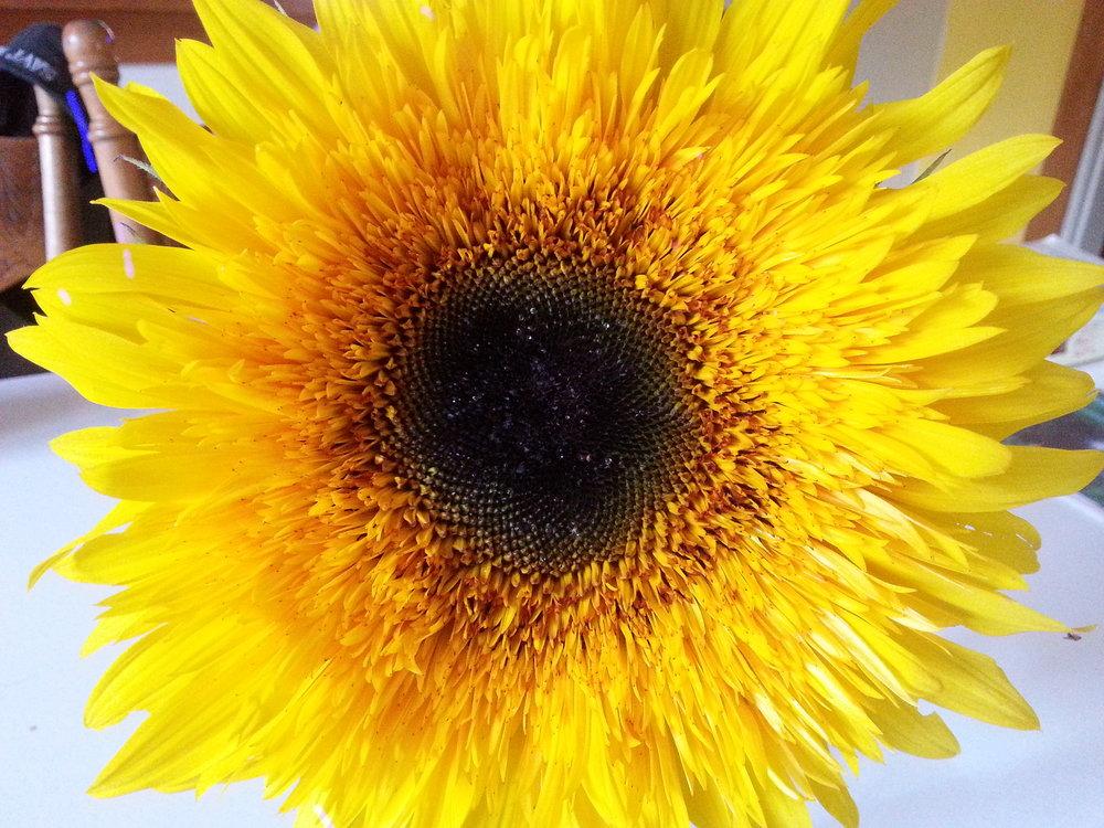 Panache Starburst Sunflower