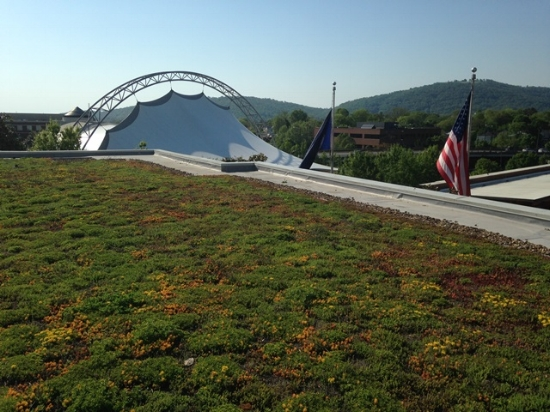The green roof at Charlottesville City Hall.