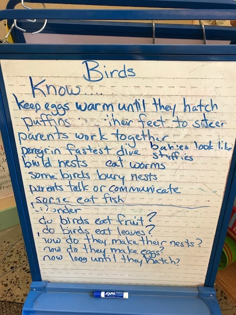 - We wanted to know how birds build nests.