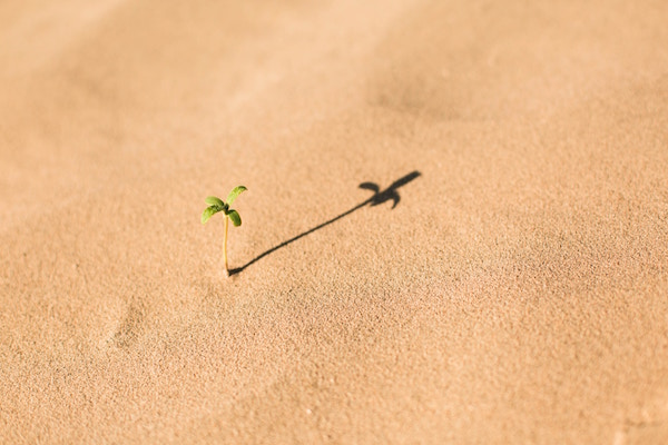 Do not despise - ...these small beginnings.
