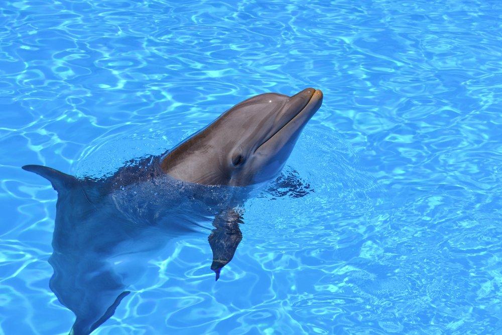 CW_Dolphin.jpg