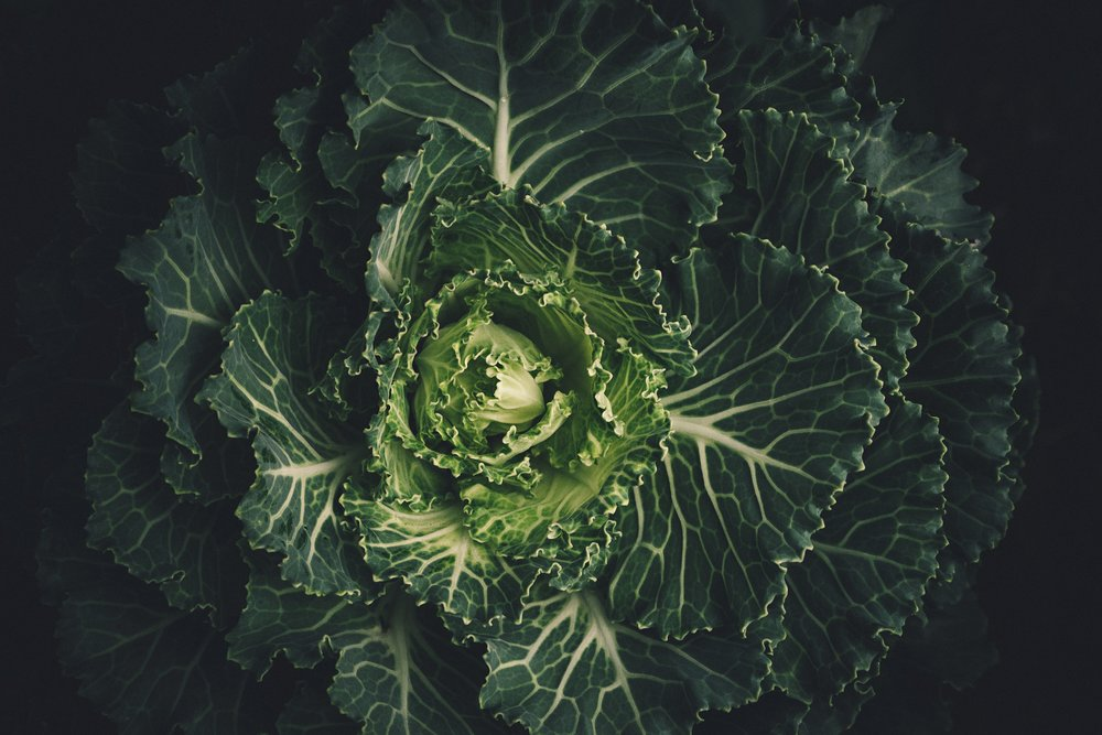 cabbage-leaves-lettuce-212932.jpg