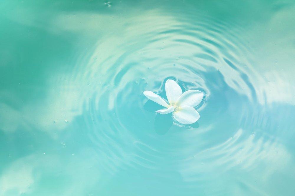 Waterlilly.jpeg