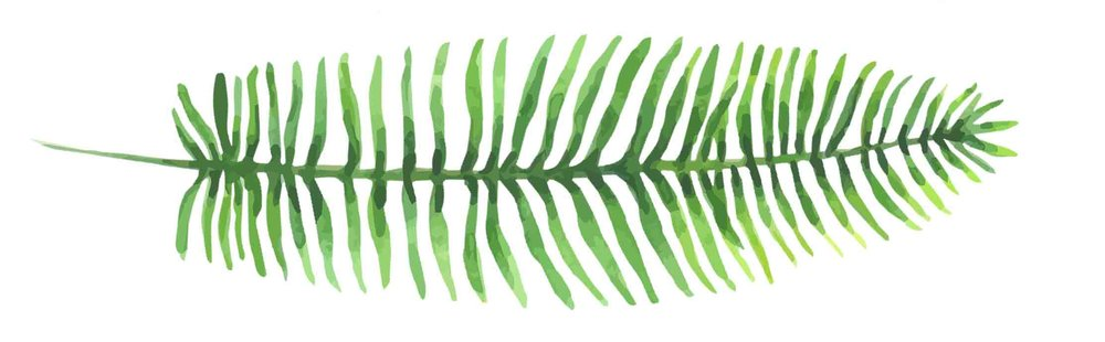 Kupukupu-Fern-On-Side.jpg