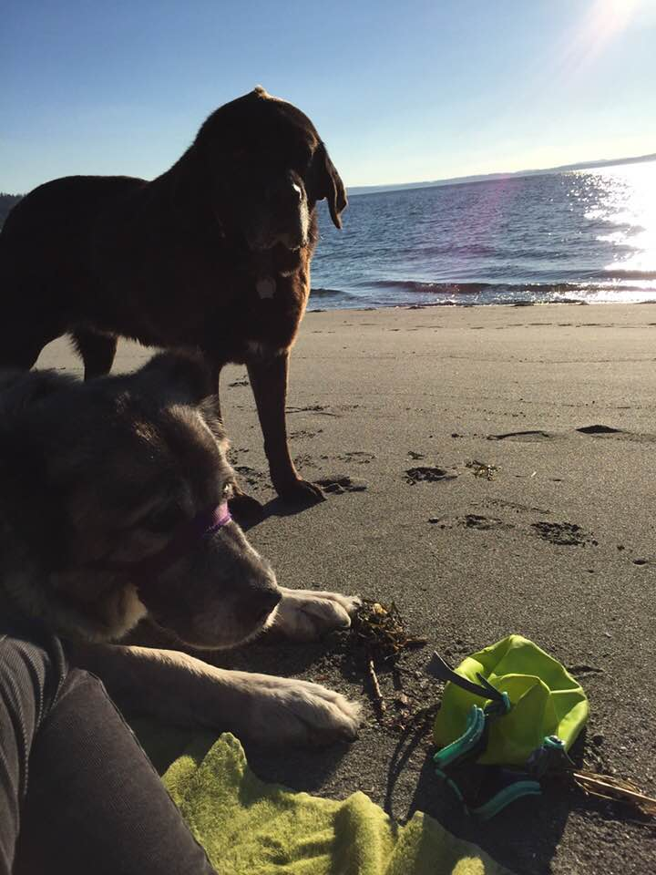 my favorite assistants: the dogs and the sea