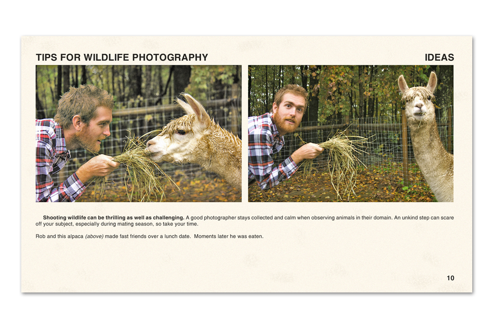 11_wildlife_photography copy.jpg