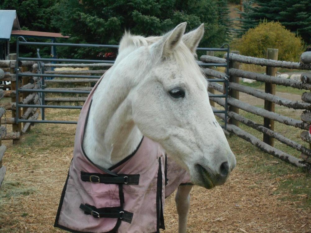 Nacona Pretty in Blanket.jpg