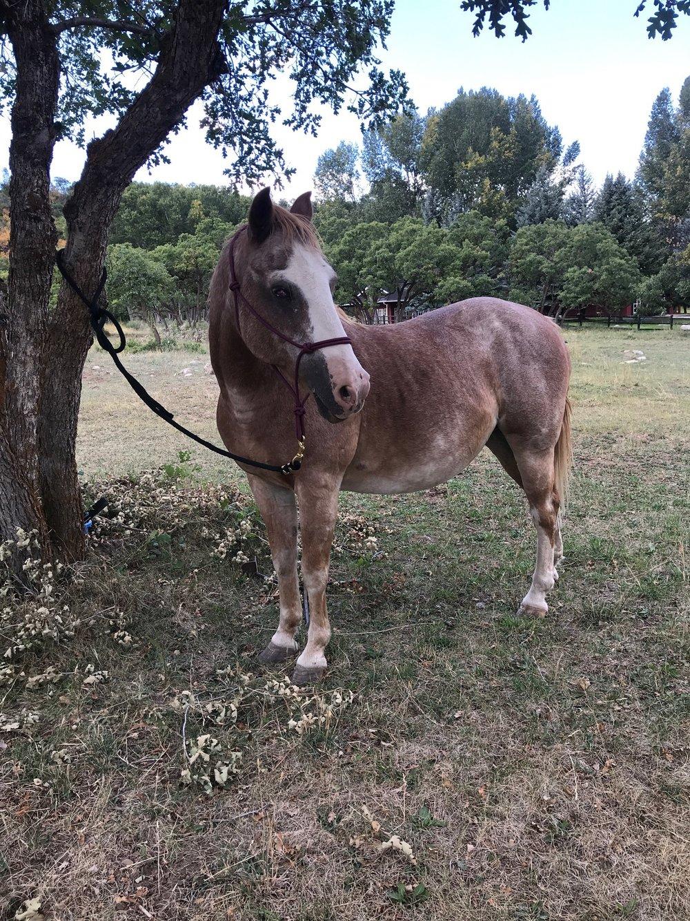 Brians Horses.JPG