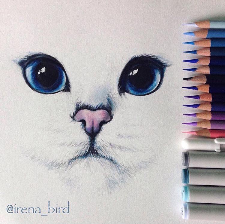 @irena_bird