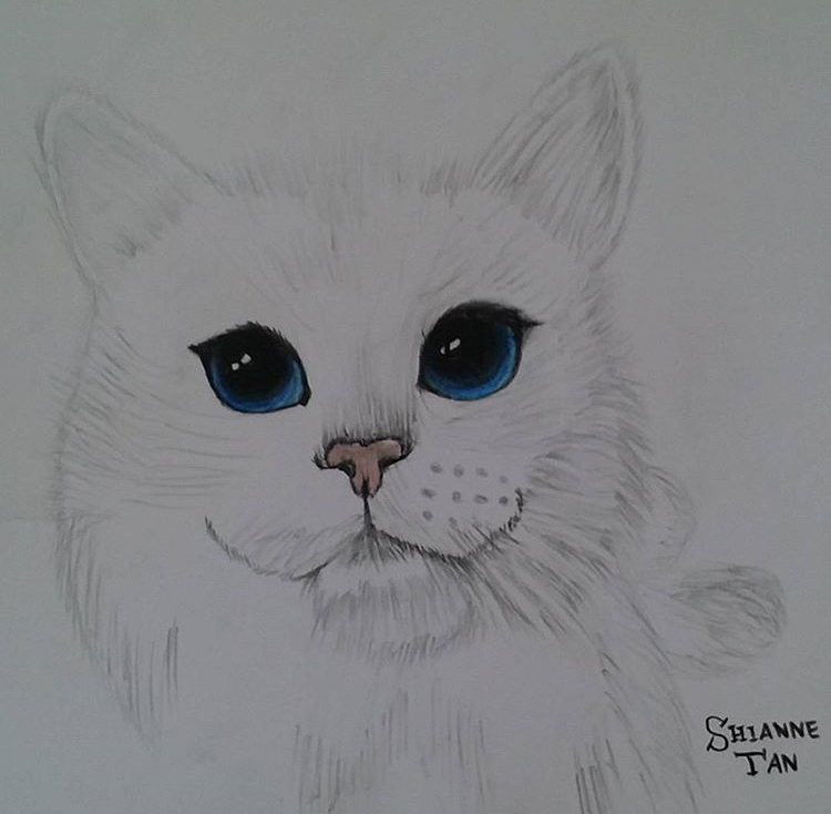 @stsy_drawings