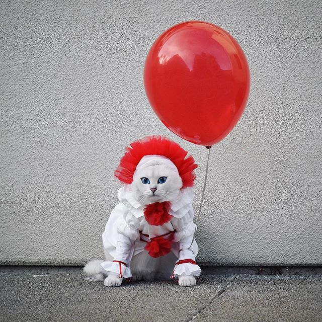 We all meow down here. #tbt