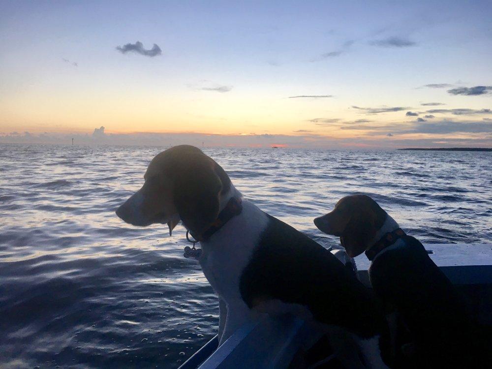 The Seadogs -