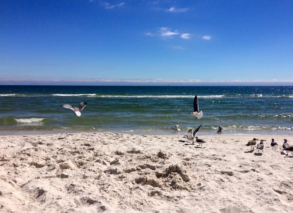 birds on beach.jpg