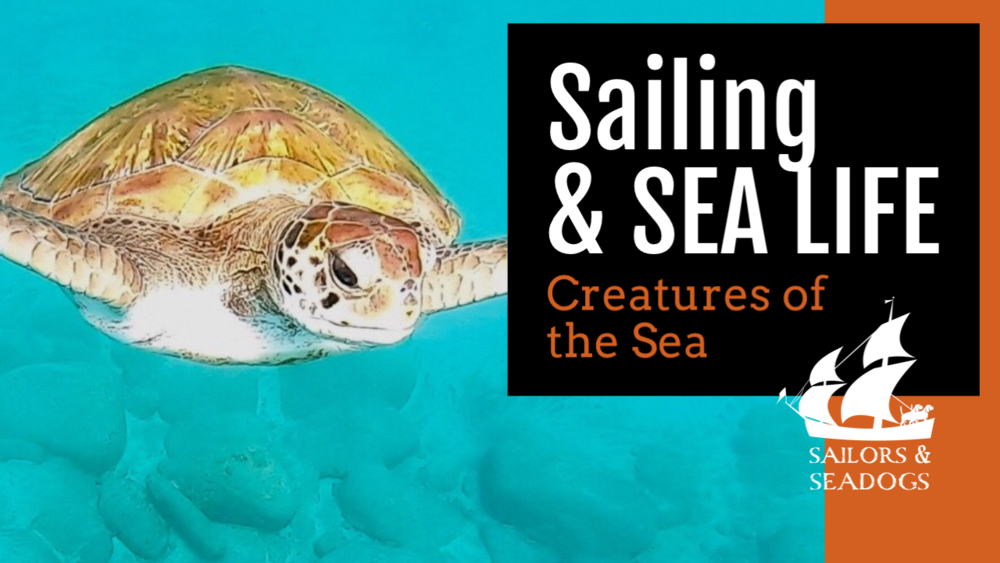 CLICK HERE TO SEE MORE ABOUT SAILING & SEA LIFE