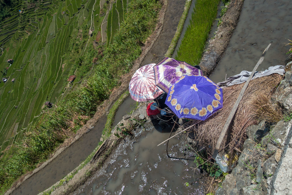 Makeshift kitchen during the rice planting. -  Banaue  , Luzon, Philippines