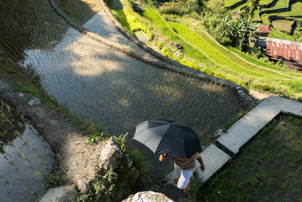 -Rice terrace, Banaue, Philippines-