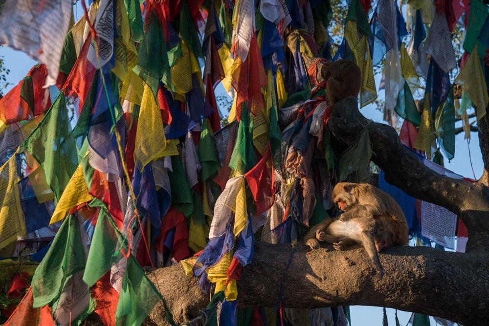 SUNRISE -Swyambhunath, (monkey temple)