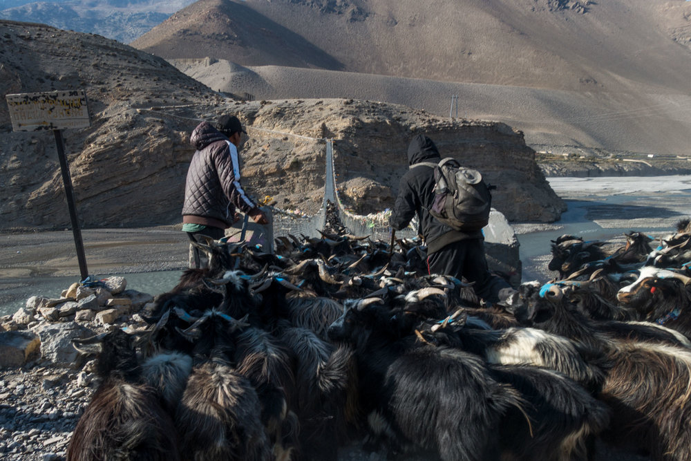 A goat herd crosses the valley on a suspension bridge.