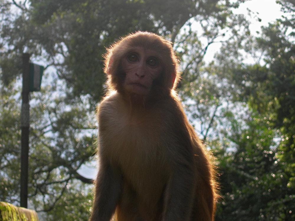 -Pashupatinath Park, Kathmandu, Nepal-