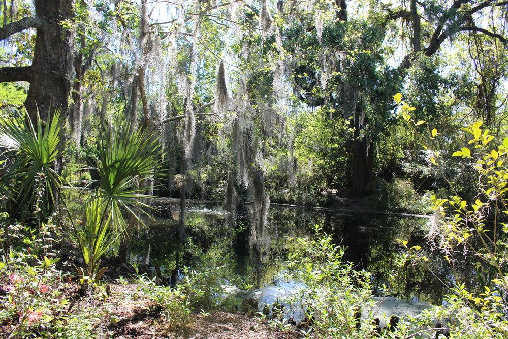 Magnolia Plantation grounds