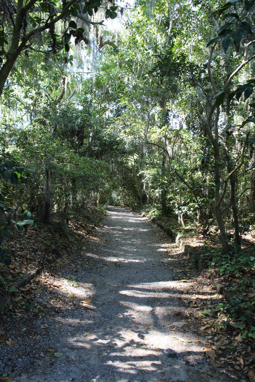 Magnolia Plantation road