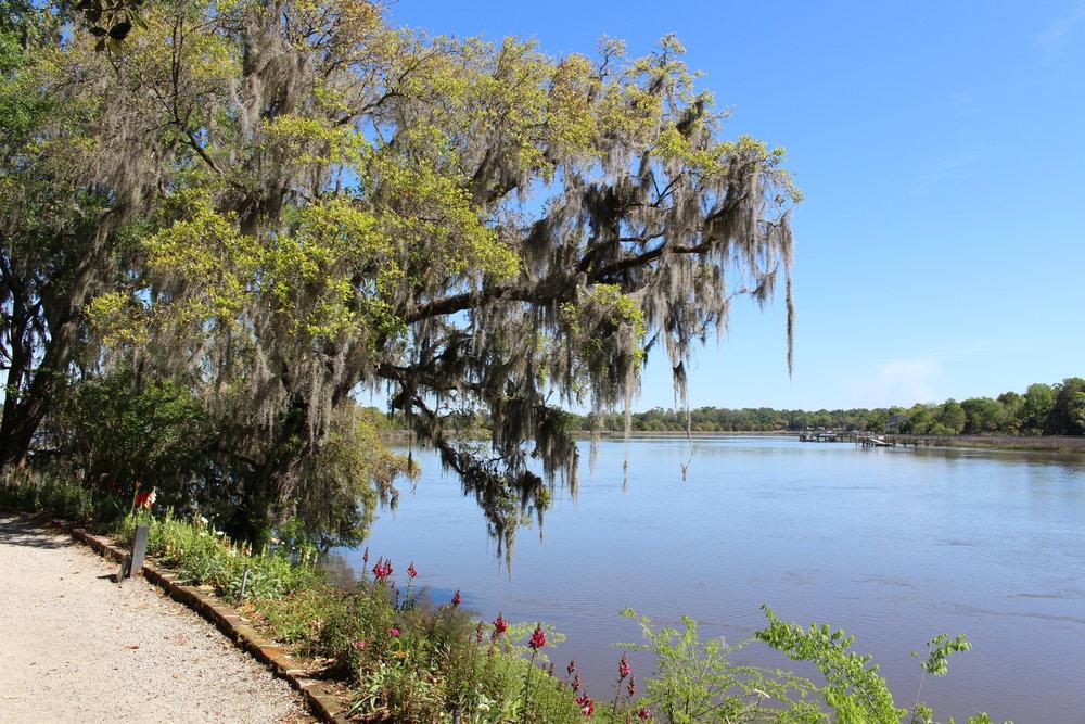 Magnolia plantation views
