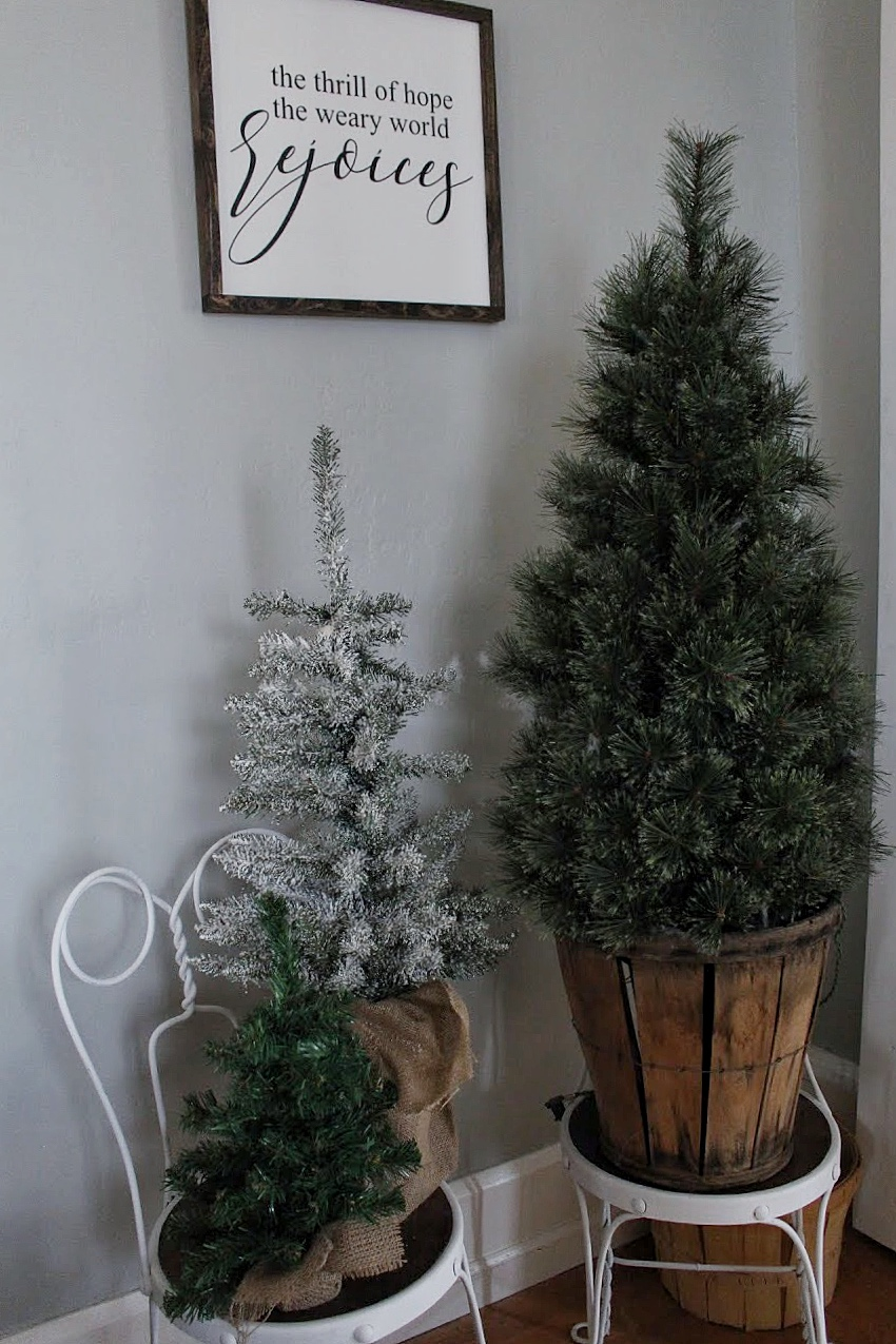 christmas tree forrest