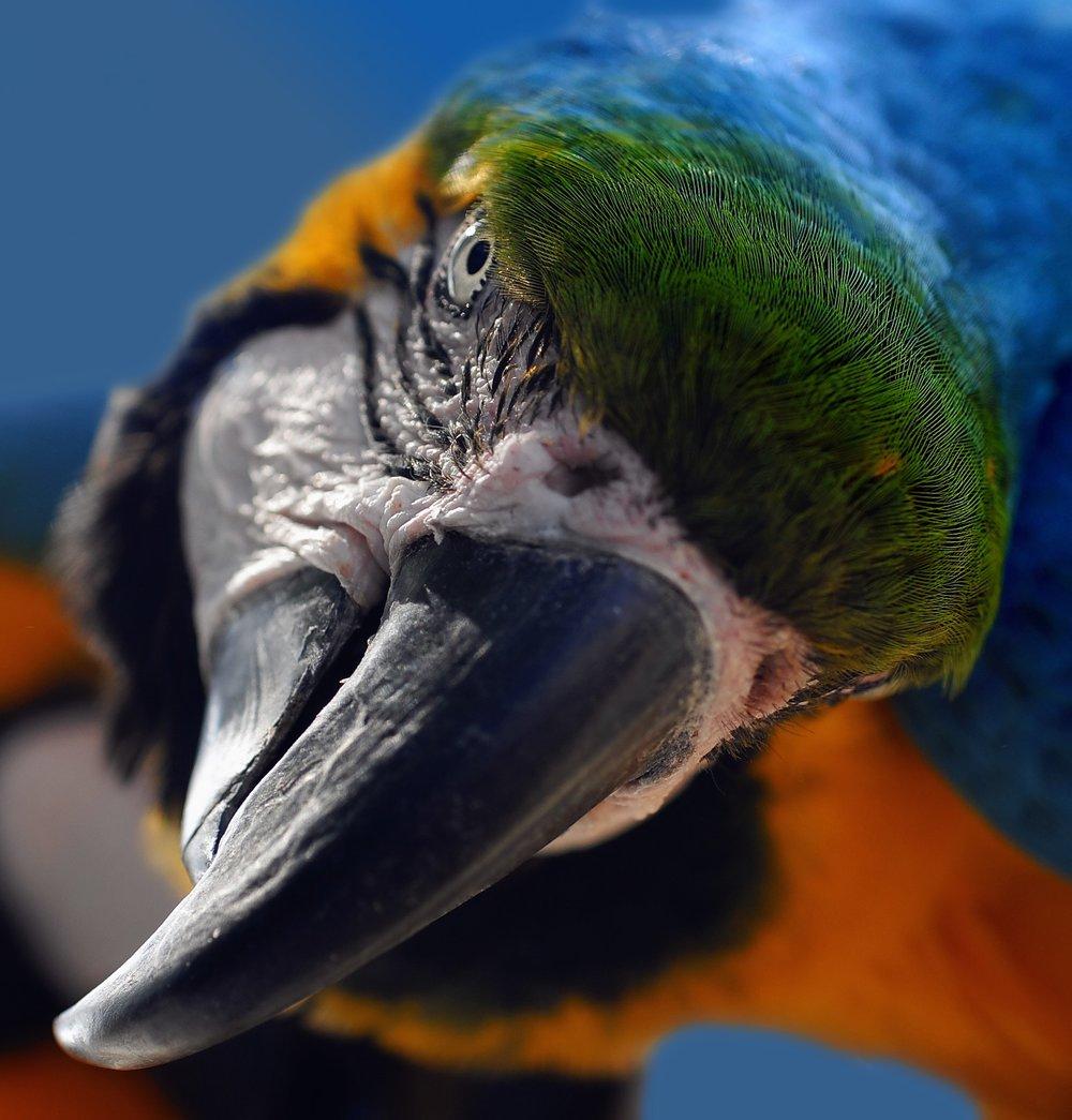ara-yellow-macaw-parrot-bird-70560.jpeg